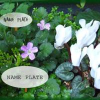 マナブdeアソボづくリンクとコラボ企画【COS下北沢植物の名札づくり】